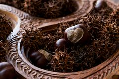 Horse Chestnuts in wooden basket. Organic Food Stock Photography