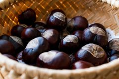 Horse Chestnuts in wooden basket. Organic Food Royalty Free Stock Photo