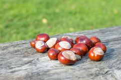 Horse chestnuts. Royalty Free Stock Images