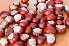 Horse chestnuts. Stock Images