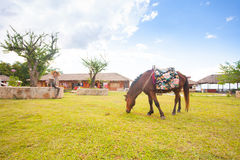 Horse in Chinese village near Chiang Mai Stock Photos