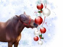Horse with christmas bulbs Stock Images