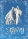 Horse on christmas card. Stock Photos