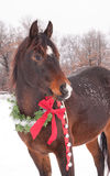 horse with a Christmas wreath and jingle bells Stock Photos