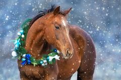 Horse in christmas wreath. Red horse portrait in christmas decoration wreath royalty free stock image