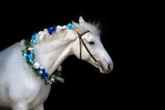 Horse with christmas wreath royalty free stock photography