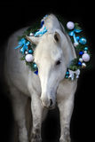 Horse with christmas wreath. White horse with christmas wreath isolated on black background royalty free stock photography