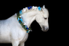 Horse with christmas wreath stock photo
