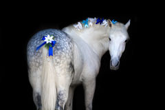 Horse with christmas wreath stock photography