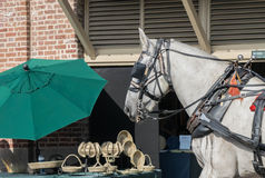 Horse at City Market in Charleston, South Carolina on summer day Stock Photography