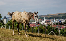 Horse and city. Near city of Gherla from Transylvania, Romania is a hill and forest. This photo was shoot on that hill Royalty Free Stock Photography