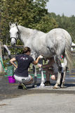 Horse cleaning Royalty Free Stock Photography