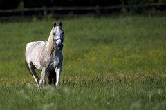 Horse in a clearing Stock Photography