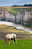 Horse on cliffs near Etretat and Fecamp Stock Photo
