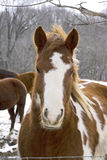 Horse close-up Royalty Free Stock Images
