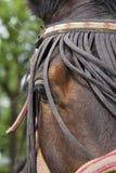 Horse close-up. Chestnut brown horse on a farm Stock Photos