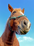 Horse close-up royalty free stock photos