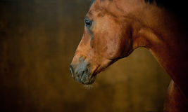 Horse close up Stock Photos