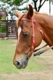 Horse. Close up of beautiful horse Stock Photo