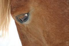 Horse close-up. Domestic horse close-up of eye stock photography