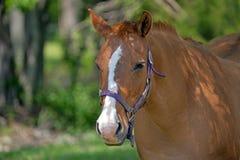 Horse Close Up Stock Photo