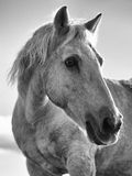 Horse in close up Stock Photos