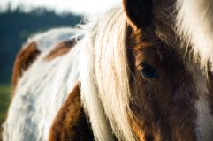 Horse close up of the head royalty free stock photos