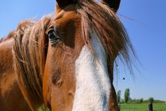 Horse close up looking in camera royalty free stock images