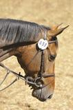 Horse close up Royalty Free Stock Photos
