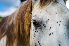 Horse close-up portrait on pasturage, summer day Royalty Free Stock Photography