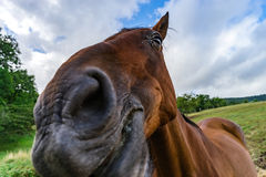 Horse close-up portrait on pasturage, summer day Royalty Free Stock Photos