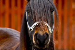 Horse in close-up Stock Photography