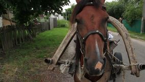Horse close up, standing harnessed countryside village scape stock video footage