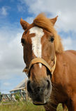 Horse, close-up. Royalty Free Stock Photography
