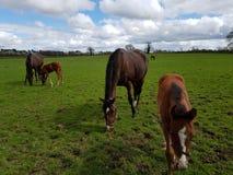 Free Horse Closeup Stock Photos - 115621673