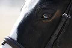 Horse closeup Stock Photos