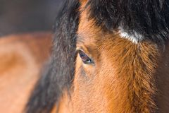 Horse Closeup. Close up of a horses eye - shallow depth of field stock image