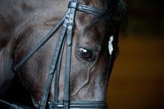 Horse closeup Royalty Free Stock Photos