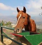Horse Closeup Stock Images