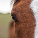 Horse Closeup. A close up capture of a Horse with focus on the eye and detailed eyelashes royalty free stock images