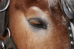 Horse closeup of eye and head by Peter J. Restivo Stock Photos