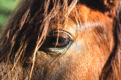 Horse closeup the eye Royalty Free Stock Photos