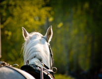 Free Horse Closeup In Harness Stock Photo - 45048180