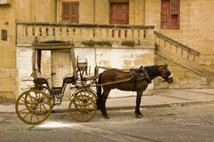 Horse coach Stock Image