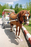 Horse coach. Horse and carriage riding through central park Royalty Free Stock Photo