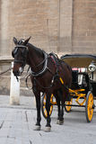 Horse And Coach Royalty Free Stock Photos