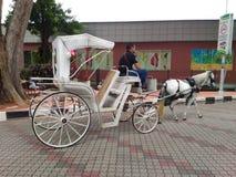 Horse Coach Royalty Free Stock Photos