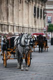 Horse coach Stock Images