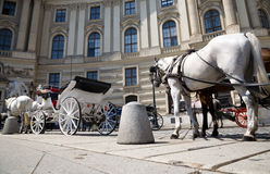 Horse with coach wide angle view. Vienna city Stock Images