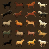 Horse coat colors Royalty Free Stock Image